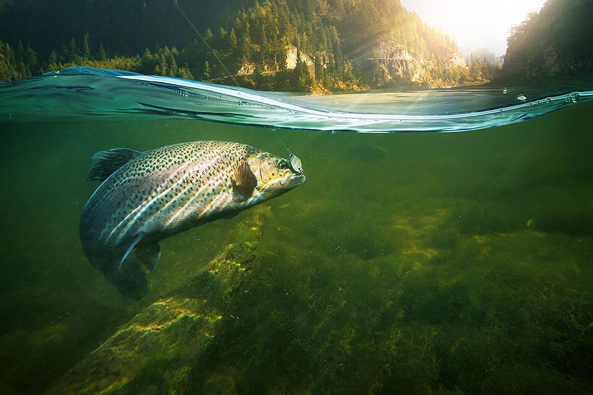 Arzneimittelstoffe und deren Abbauprodukte belasten flächendeckend die Gewässer. (Foto: vitaliy_melnik, Fotolia)